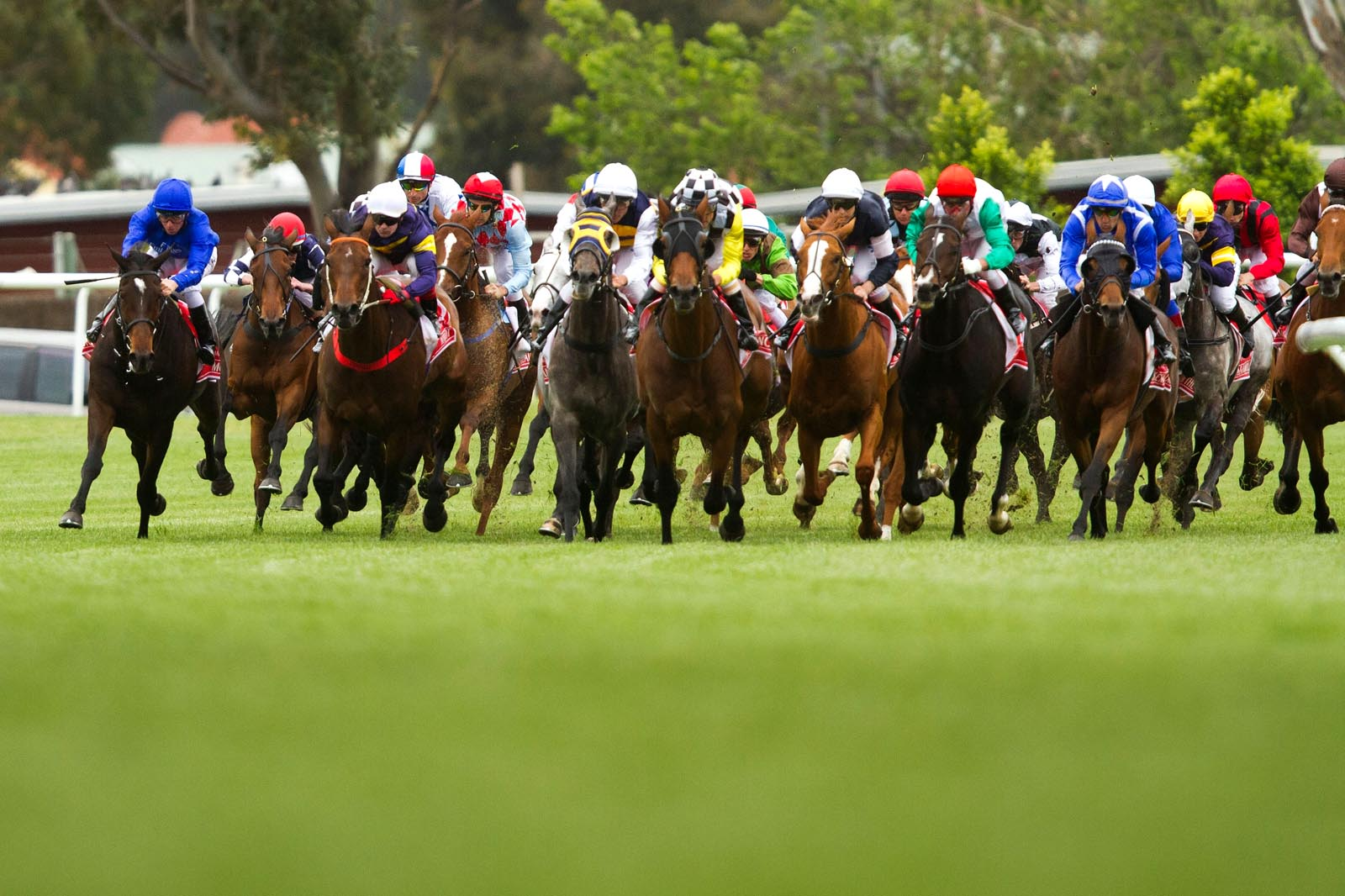 trifecta odds for melbourne cup
